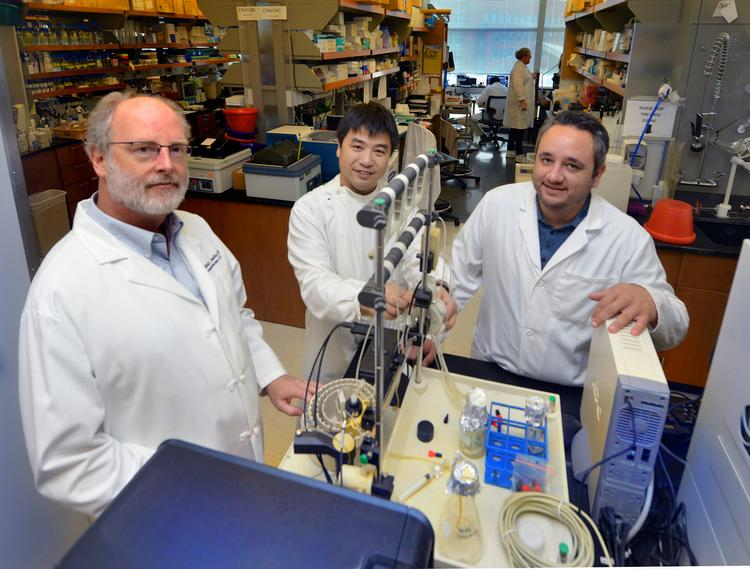 Drs. Andrew Mellor, (left to right), Lei Huang and Henrique Lemos. Dr. Huan, a research scientist, Dr. Lemos, a postdoctoral fellow, and co-authors on the study.