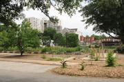 Wheat Street Baptist Church and its gardens, where aging apartments were torn down for the chance of urban renewal.
