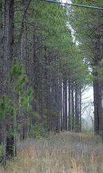 Investors stand tall on forestland