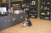 Metrodog co-owners Ryan Adkins, left, and Alex Stowell, with pug Jack and border collie Sophie.