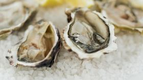 Oysters are especially vulnerable to the effects of ocean acidification.