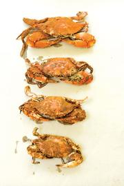 Know your crab sizes. Shown here are crabs sized medium through jumbo.