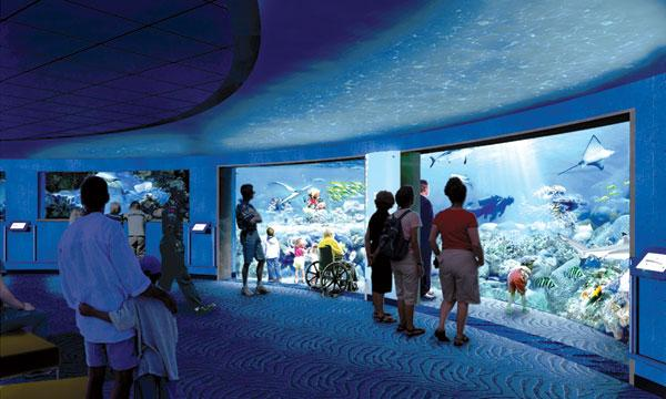 A rendering of the Blacktip Reef underwater viewing area at the National Aquarium in Baltimore.