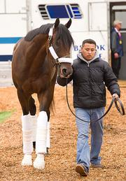 Preakness runner Dance City arrives at Pimlico on Wednesday.