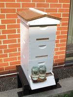 InterContinental Harbor Court Hotel buzzes with new beehives