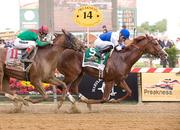 In a nail-biter, Shackleford defeated Animal Kingdom in the 136th running of the Preakness Stakes on May 21 at Pimlico Race Course.