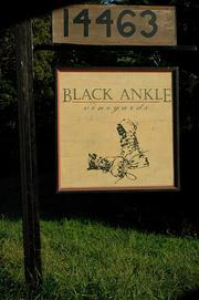 Black Ankle Vineyards, of Mount Airy, has been given the green light to ship wine in the state.
