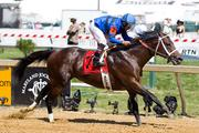 Westrock Stables LLC's Hamazing Destiny, trained by D. Wayne Lukas, won the $100,000 Maryland Sprint Handicap. The race was one of 13 at Pimlico Race Course on May 19.