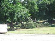 A tree split in half on the ground in Patterson Park following a quick moving storm on Friday night.