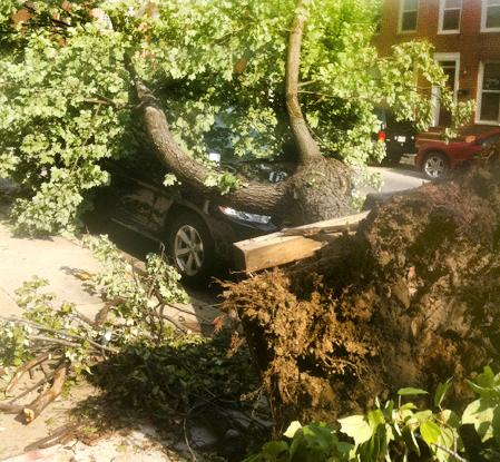 An uprooted tree toppled onto on a car along Fort Avenue in South Baltimore. A quick moving storm on June 29 left damages across the mid-Atlantic.