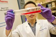 Linzhao Cheng received $1.6 million in stem cell research funds in 2009. .