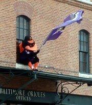 One Baltimore bird salutes another.