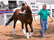 Went the Day Well, trained by Graham Motion, will start the Preakness from the No. 5 post. The horse has 6-1 odds to win the race.