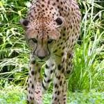 Columbus Zoo opposes mascot exemption in exotic animals bill