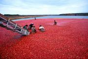 Can-do: Ocean Spray Cranberries Inc., with world headquarters in Middleborough, shipped out 634,692 tons of canned fruits, vegetables and preserves products valued at over $103 million.
