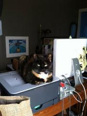 Bunnymouse, a calico rescue cat,accompanies her owner Leslie Aisner Novak to work every day atHowda Designz, which makes lightweight portable wood and canvas seats.