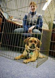 Rocky, a Puggle, belongs to Emilie Maloy, pharmacy coordinator at SmartPak.