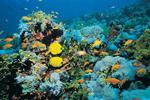Matrix-backed Digital Reef acquired by TransPerfect