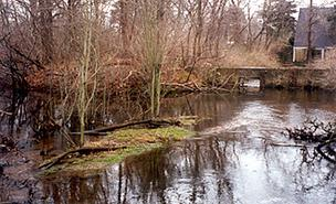 Marstons Mills River Project in Marstons Mills received an $85,000 grant to protect 1.2 acres of land and freshwater wetlands.
