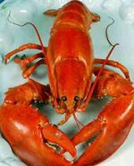 Forget the turkey; pass the Christmas lobster