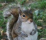 Documentary attacks annual Holley Squirrel Slam
