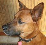 Animal abuse, cruelty alleged against Niagara SPCA boss