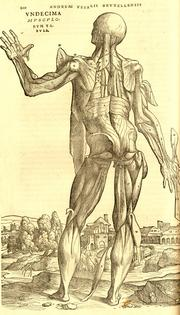 "Andreas Vesalius (1514 - 1564) was a Belgian physician whose work, ""De humani corporis fabrica"" (On the Fabric of the Human Body), in 1543, established him as the father of modern human anatomy. This is an illustration from that book. The work described the human body in great detail and demonstrated that humans are made of the same things and more-or-less assembled the same way as the lower animals."