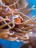 Falls' Aquarium renovation moving ahead