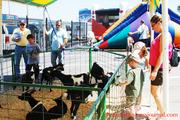 The Powerade Play Zone at Food Lion Auto Fair featured a petting zoo, water slide, face-painting and a Lego build zone.