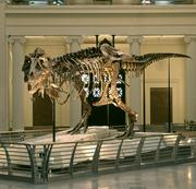 Sue the T. rex is one of the Field's most popular attractions.