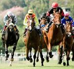 Politicians support horse track plan
