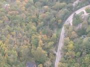 An overhead view of trees in Anderson Township, one of the areas hit hardest so far by the emerald ash borer.