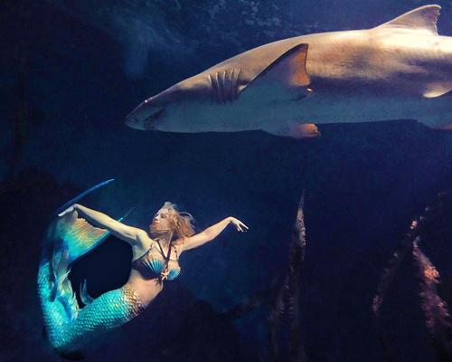 Oakley-based Animal Instinct Advertising represents Mermaid Melissa, a former SeaWorld trainer who performs shows at zoos and aquariums.