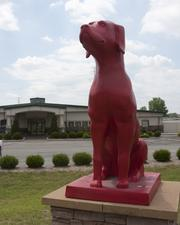 Red Dog has 28,000 square feet of space for dogs and cats. It has 43 themed suites.