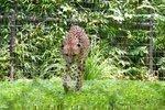 Exotic animals facility in Reynoldsburg wins $3.5M funding