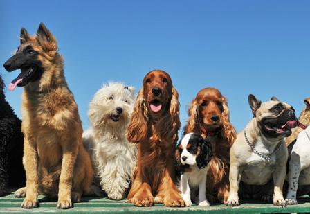Dogs take center stage at the Nov. 4 event.