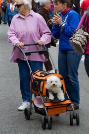 This dog is riding in orange pumpkin style.