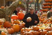 100,000 pounds of pumpkin, squash and gourds are on display.