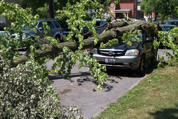 Storms that ripped through the region on Friday left downed trees on many streets, cars, homes and power lines.   This one took out a Mazda on 8th Avenue between High Street and Neil Avenue.