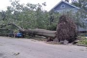 A downed tree on West Weber in Clintonville.