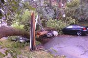 A falling tree in Clintonville crushed a car and a utility pole.