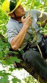 Slideshow: Arborist keeps safety in mind when taking down tree