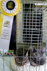 The Cozy Cat Cottage Adoption Center in Powell had cats available to take home. It competed in an educational category.