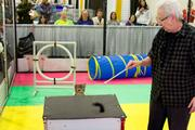 Dino, an Ocicat from North Carolina,       is coaxed through the feline obstacle course by his owner, Sonja Moscoffian. This is a popular competition at the CFA show.