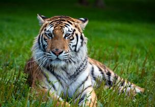 Owners of exotic animals in Ohio now must register with the state.