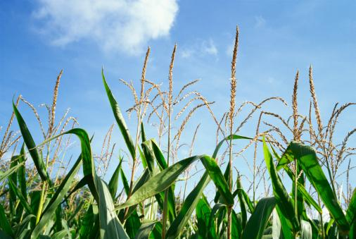 The Ohio Department of Agriculture has bolstered its leadership team.