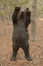 Worthington bear mascot lands appearance in Doritos' Super Bowl ad contest