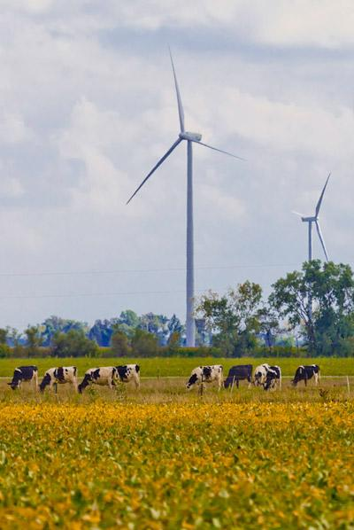 Iberdrola Renewables' Blue Creek Wind Farm in northwest Ohio is going to provide power to Ohio State.