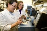 Yael Vodovotz, right, associate professor, and Jennifer Ahn-Jarvis test the moisture in a soy bread developed at Ohio State that helps control high cholesterol.