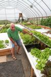 Fresh Harvest Farm using aquaponics for vegetable production